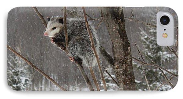 Opossum In A Tree IPhone Case