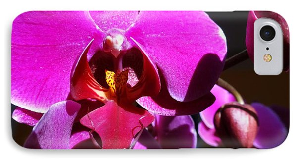 Orchid From My Valentine 3 IPhone Case