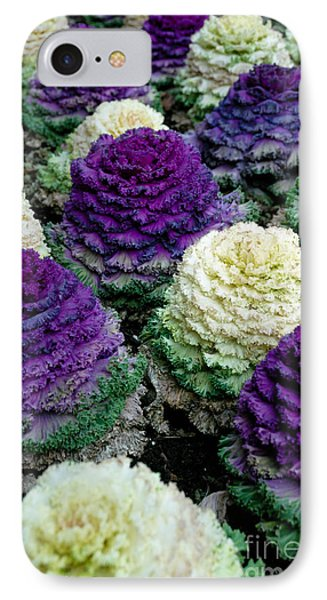 Ornamental Cabbage IPhone Case