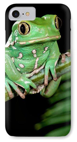Painted Monkey Frog Phyllomedusa IPhone Case