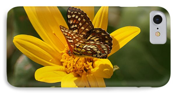 Palmer's Metalmark Butterfly IPhone Case