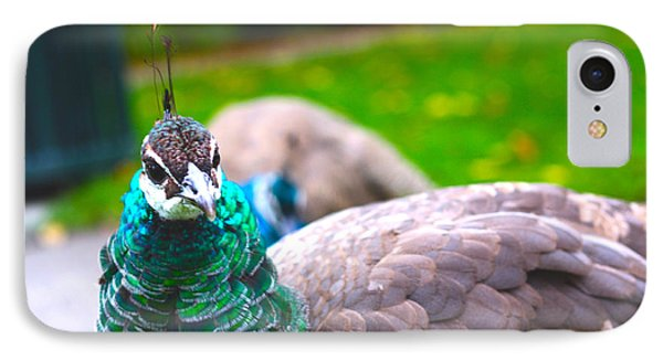 Peacock 3 IPhone Case