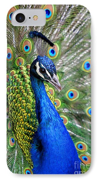 Peacock On Display IPhone Case