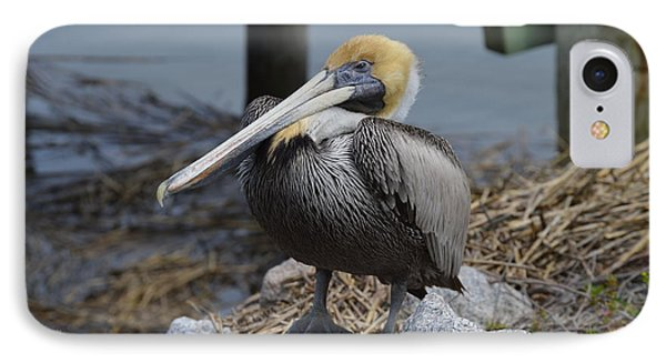 Pelican On Rocks IPhone Case