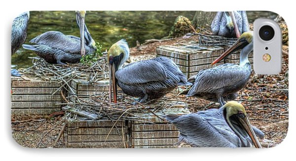 Pelicans By The Dock IPhone Case