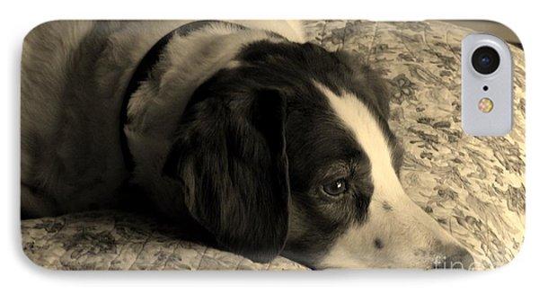 Pet Portrait-waiting For Mom IPhone Case