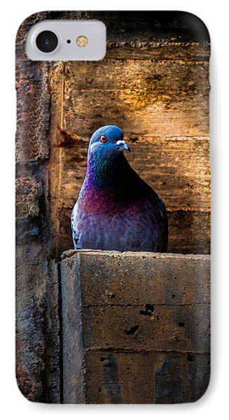 Pigeon Of The City IPhone Case