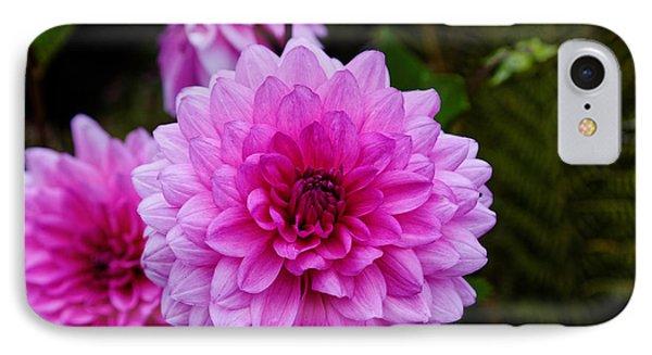 Pink Dahlias IPhone Case