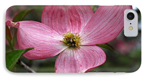 Pink Flowering Dogwood IPhone Case