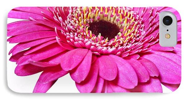 Pink Gerber Daisy Flower IPhone Case