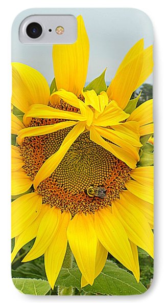 Pleading Sunflower IPhone Case