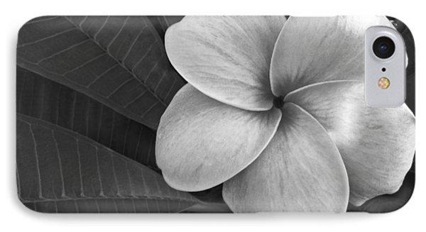Plumeria With Raindrops IPhone Case