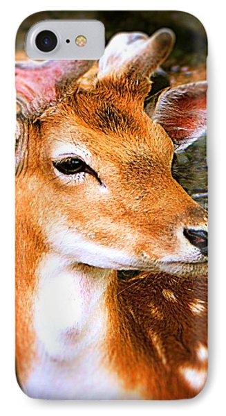 Portrait Male Fallow Deer IPhone Case