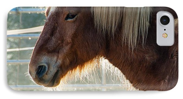 Portrait Of A Brown Horse IPhone Case