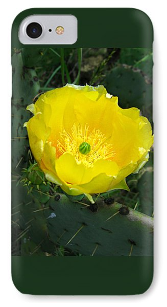 Prickly Pear Cactus IPhone Case