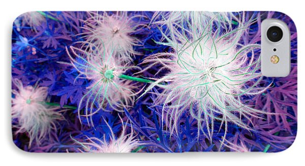 Pulsatilla Seed-head IPhone Case