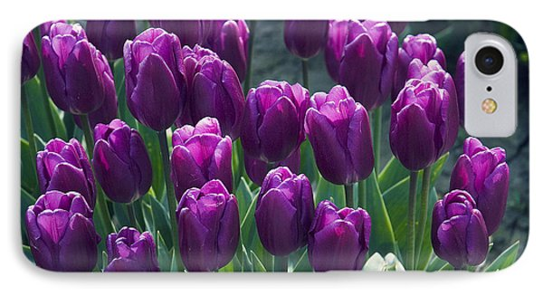 Purple Tulips IPhone Case