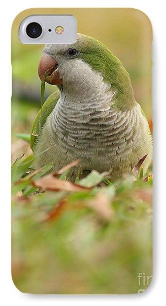 Quaker Parrot #3 IPhone Case