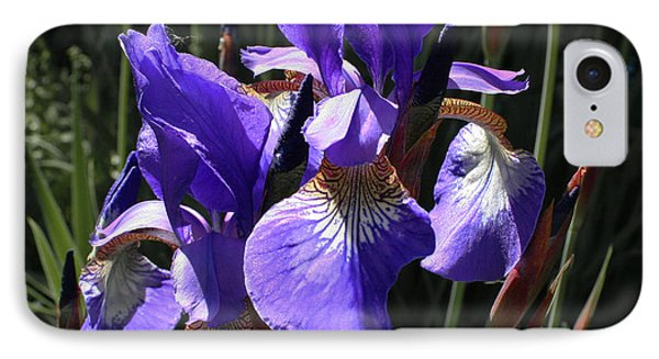 Quebec Provincial Flower IPhone Case