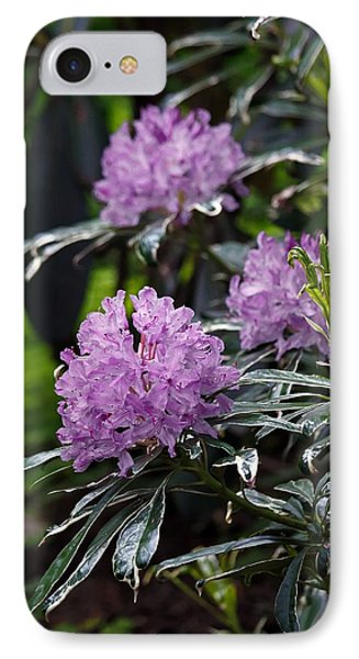 R. Ponticum Variegatum IPhone Case