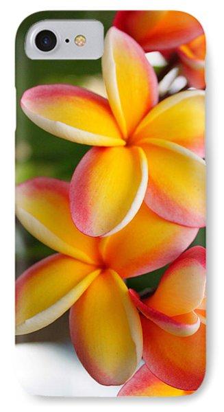 Plumeria Smoothie IPhone Case