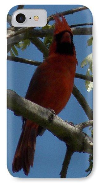 Red Bird 1 IPhone Case