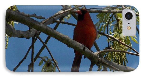 Red Bird 3 IPhone Case