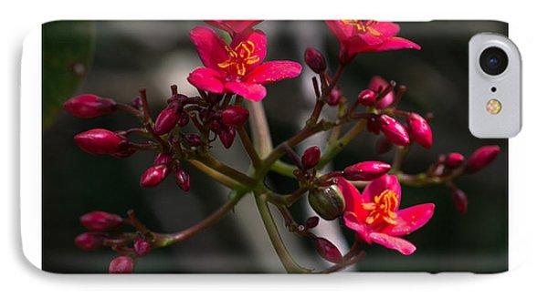 Red Jatropha Blossoms IPhone Case