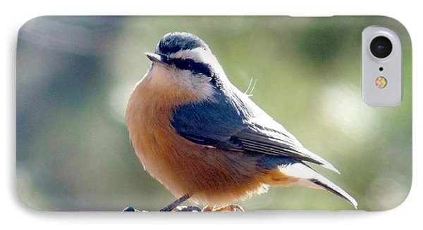 Red-breasted Nuthatch IPhone Case