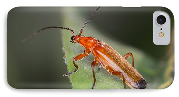 Red Cardinal Beetle IPhone Case