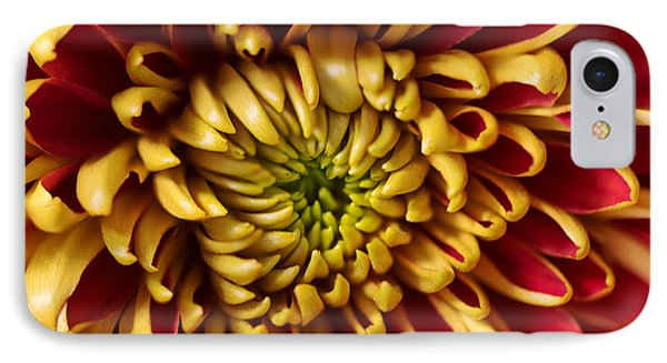 Red Chrysanthemum IPhone Case