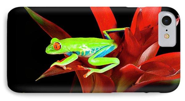 Red Eye Treefrog, Agalychnis IPhone Case