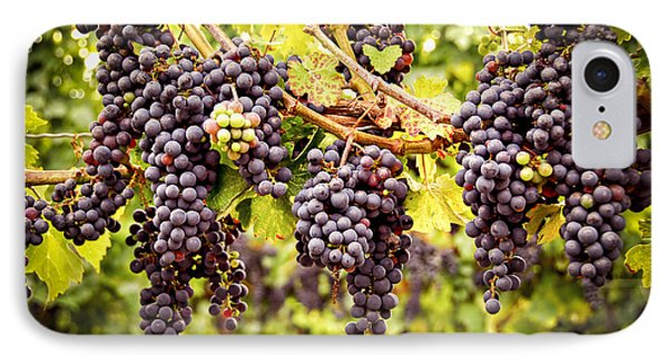 Red Grapes In Vineyard IPhone Case