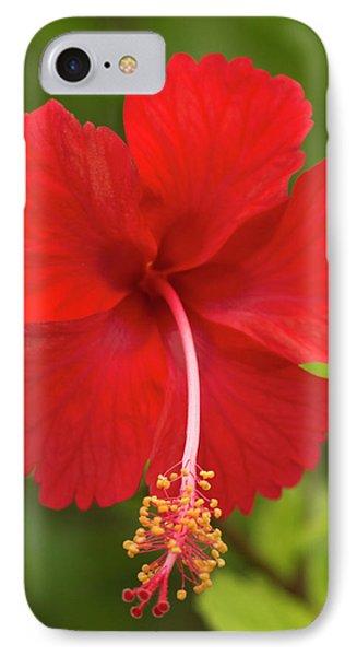 Belize iPhone 8 Case - Red Hibiscus, Hibiscus Rosa-sinensis by William Sutton