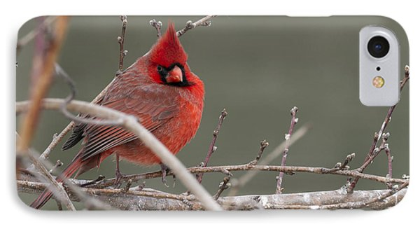 Red In Winter IPhone Case