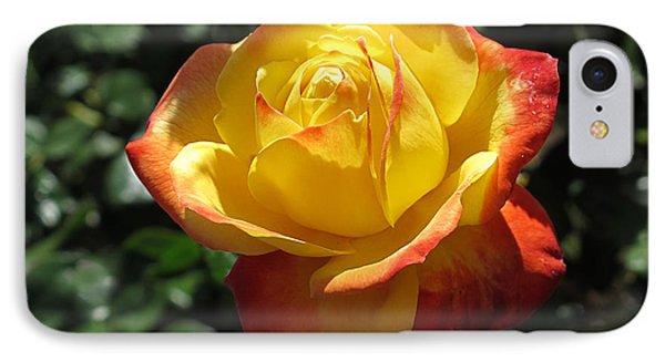 Red Orange Rose IPhone Case