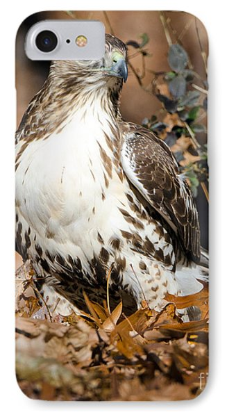 Red Tail Daze IPhone Case
