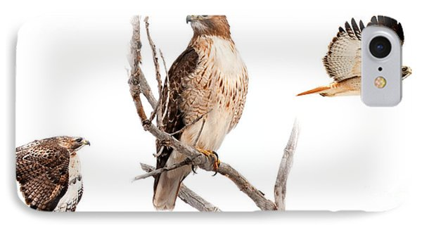 Red Tail Hawk Series IPhone Case