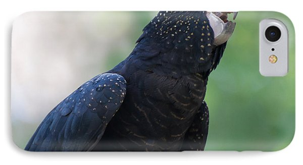 Red-tailed Black Cockatoo IPhone Case