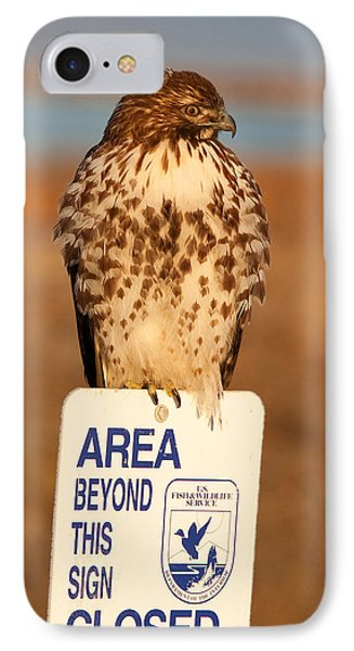 Red Tailed Hawk Lower Klamath National Wildlife Refuge Northern California IPhone Case