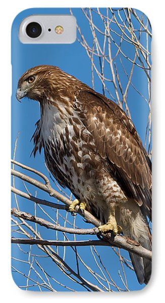 Red-tailed Hawk Watching The Ducks IPhone Case