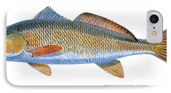 Drum iPhone 8 Case - Redfish by Carey Chen