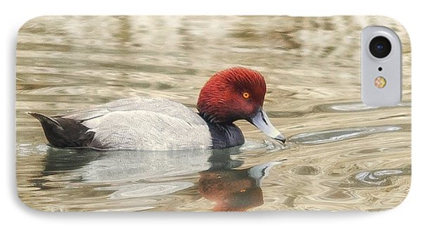 Redhead Duck In Golden Pond IPhone Case