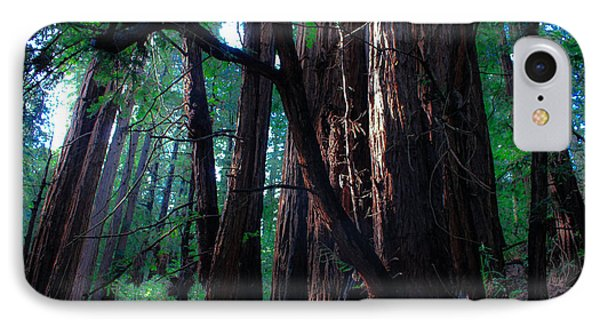 Redwood Forest IPhone Case