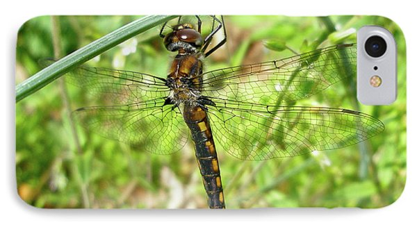 iPhone 8 Case - Resting Brown Dragonfly by Mother Nature
