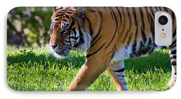 Roaming Tiger IPhone Case