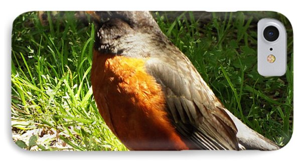 Robin Red Brest IPhone Case