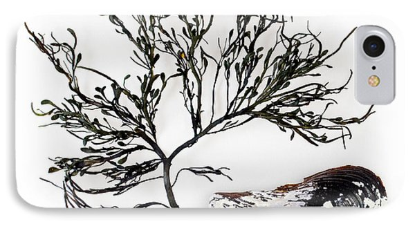 Rockweed And Mussel IPhone Case