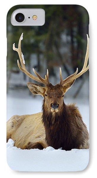 Rocky Mountain Elk IPhone Case