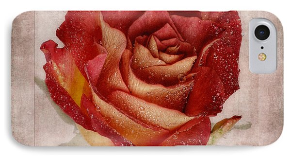 Rosa Floribunda Rainbow Sorbet IPhone Case